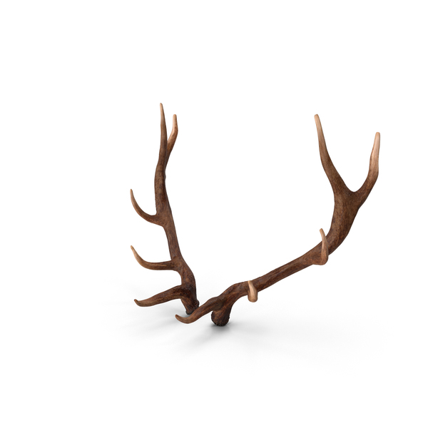 Elk Antlers PNG Images & PSDs for Download.