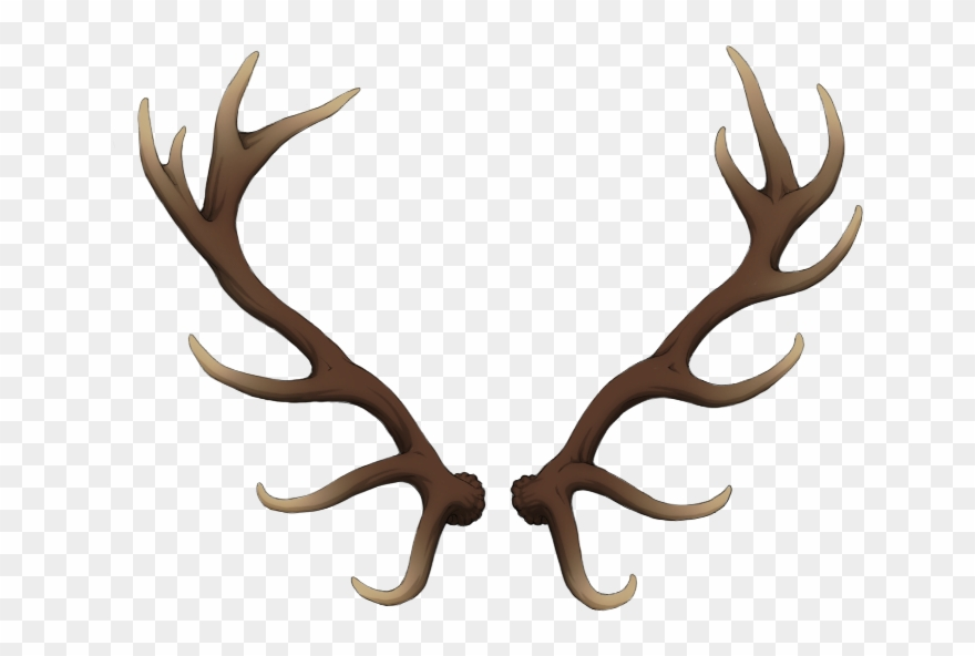 Freeuse Stock Antlers Transparent Deer.