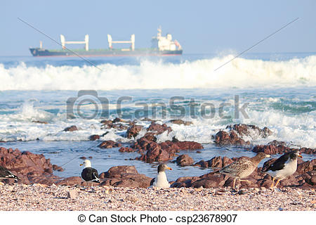 Stock Photography of seagulls take a rest on shore in Antofagasta.