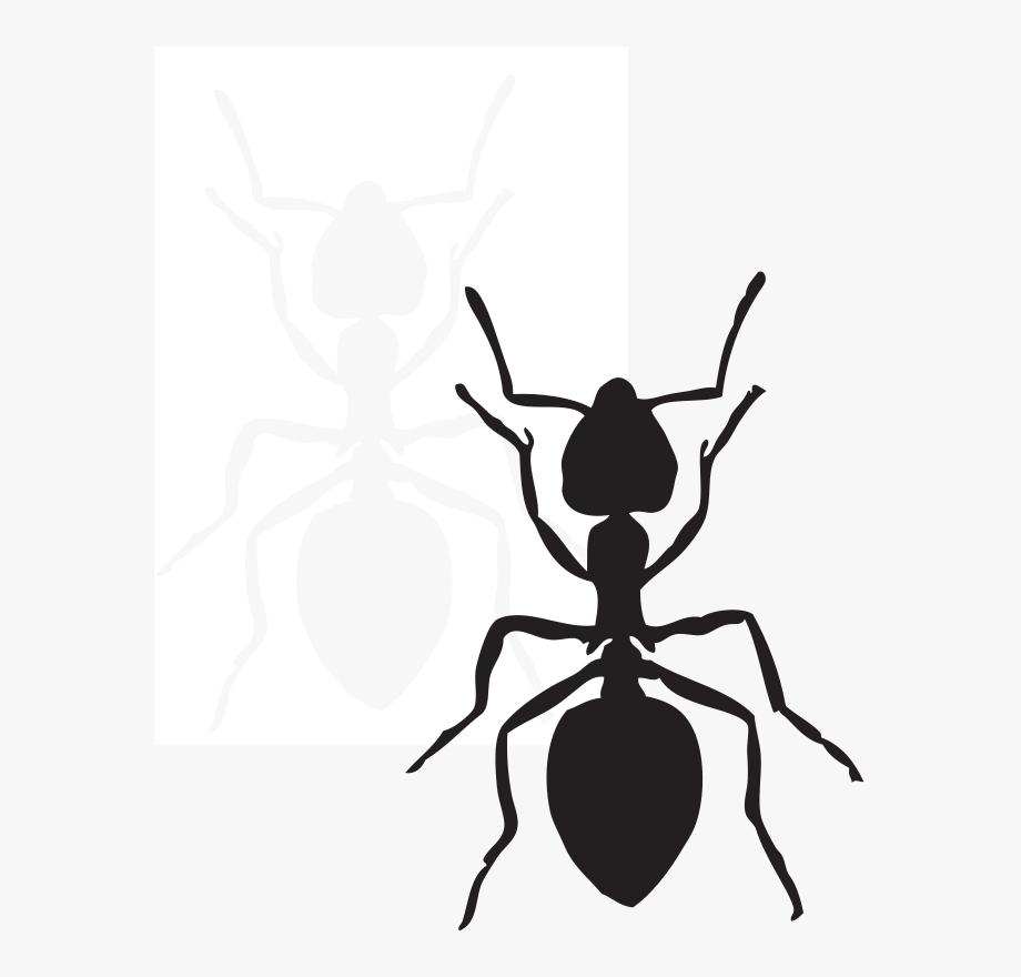 Pez Clip Art Download Little Einsteins Birthday, Ants,.