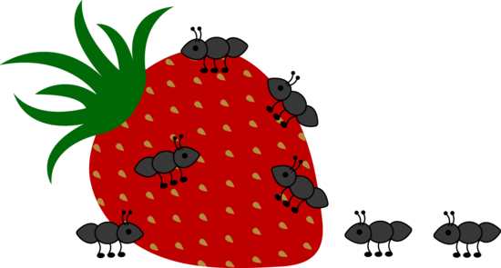Ants Crawling on Strawberry.
