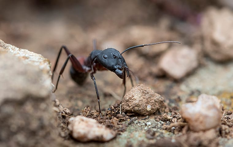 Ant Identification & Prevention Guide.