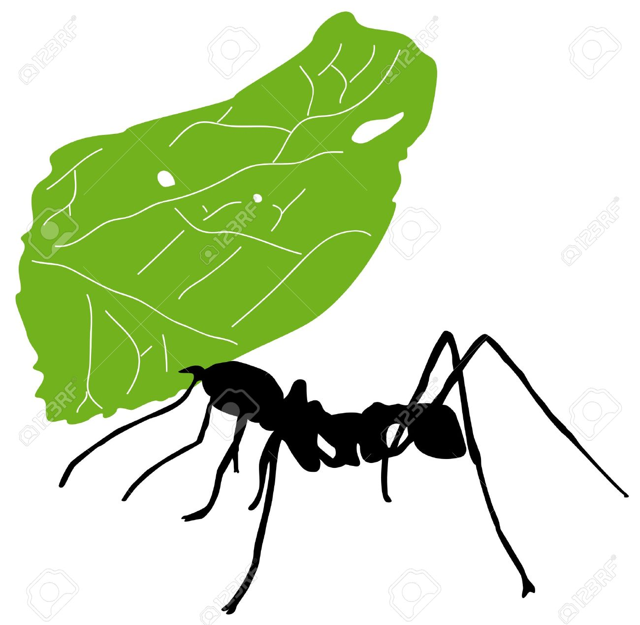Leaf Cutter Ants Clipart.