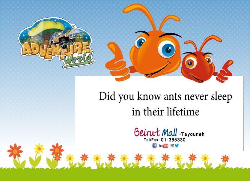 Did you know #ants never sleep in their #lifetime #didyouknow.