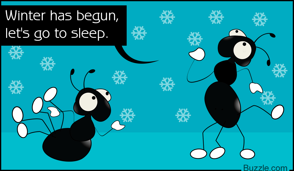 Do Ants Sleep? The Answer Will Certainly Blow Your Mind.