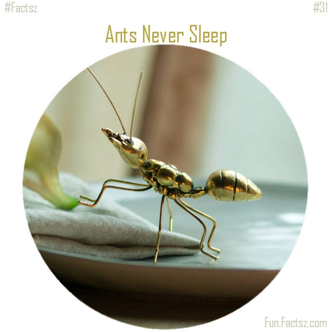 Ants never sleep in their lifetime clipart 3 » Clipart Station.