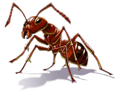 Pic Ants PNG.