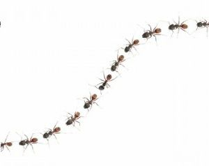 Trail of ants clipart.