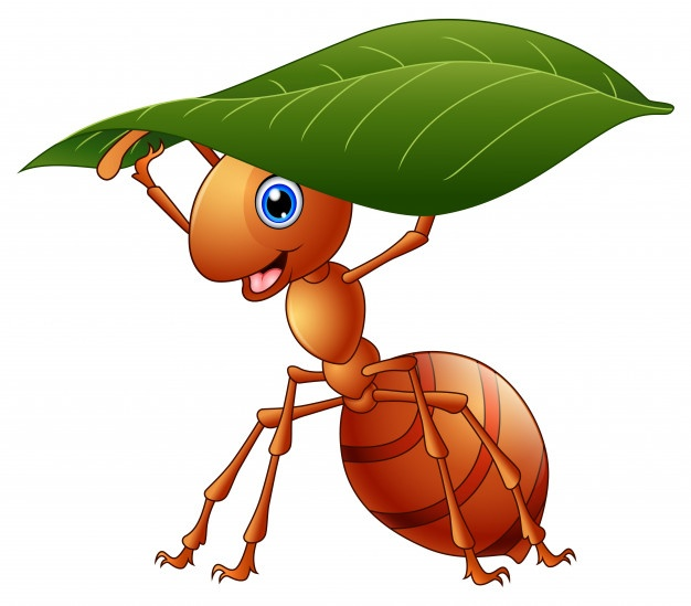 Ant Vectors, Photos and PSD files.
