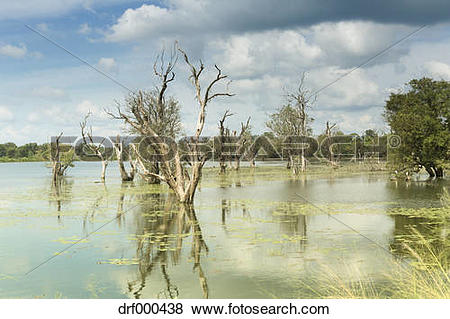 Pictures of Sri Lanka, lake and old trees near Anuradhapura.