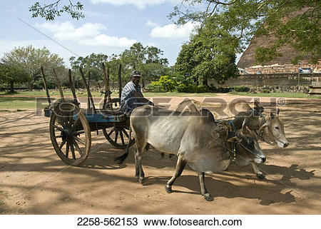 Stock Photo of Farmer on an ox cart with a stupa in the background.