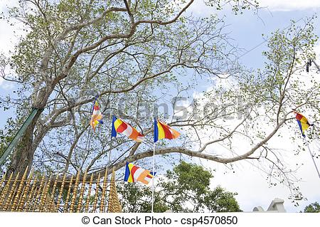 Stock Photography of Sacred Bo Tree, Anuradhapura, Sri Lanka.