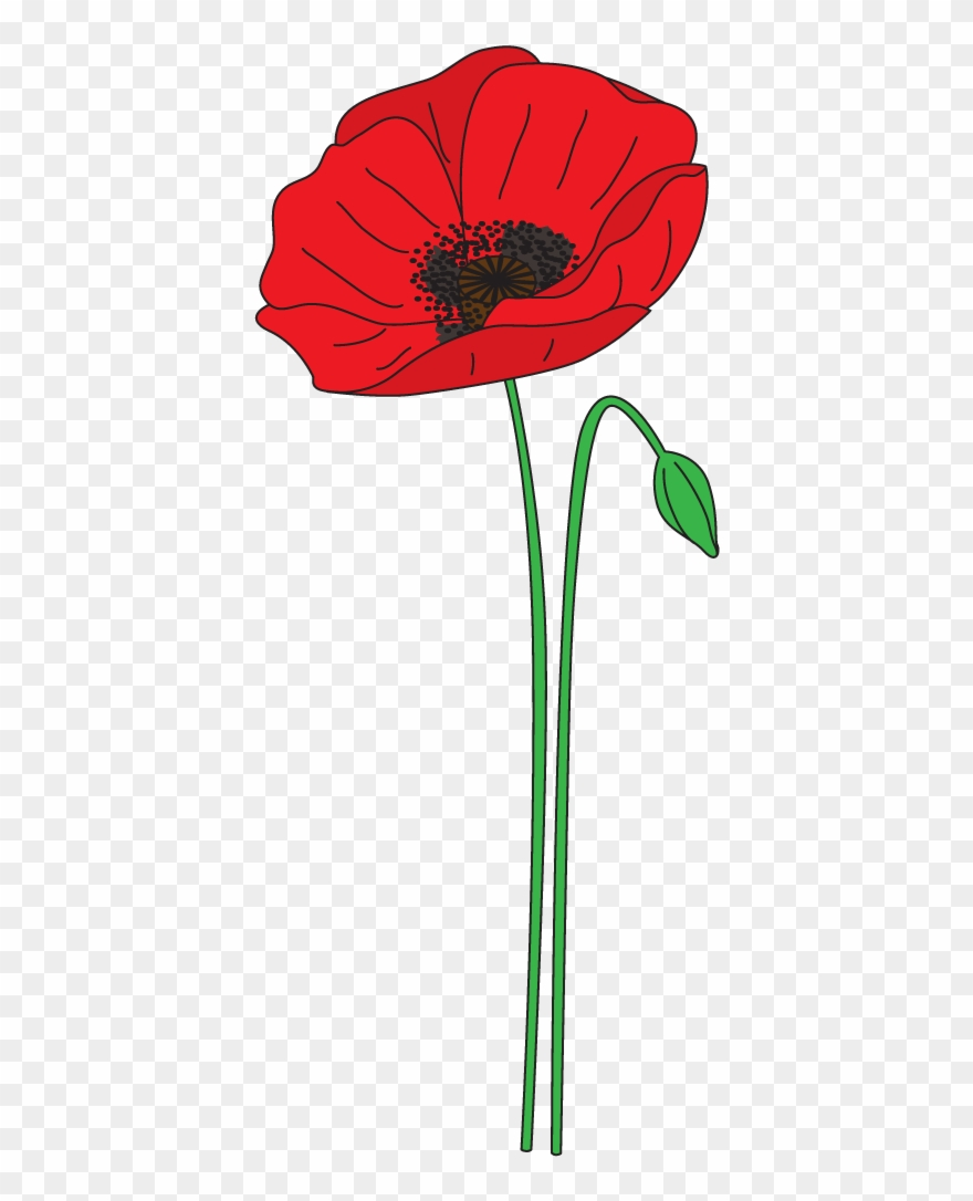 Png Transparent Stock Collection Of Anzac High Quality.