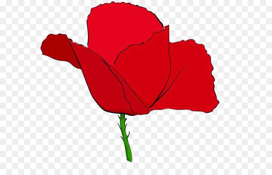 Anzac Day Poppy.