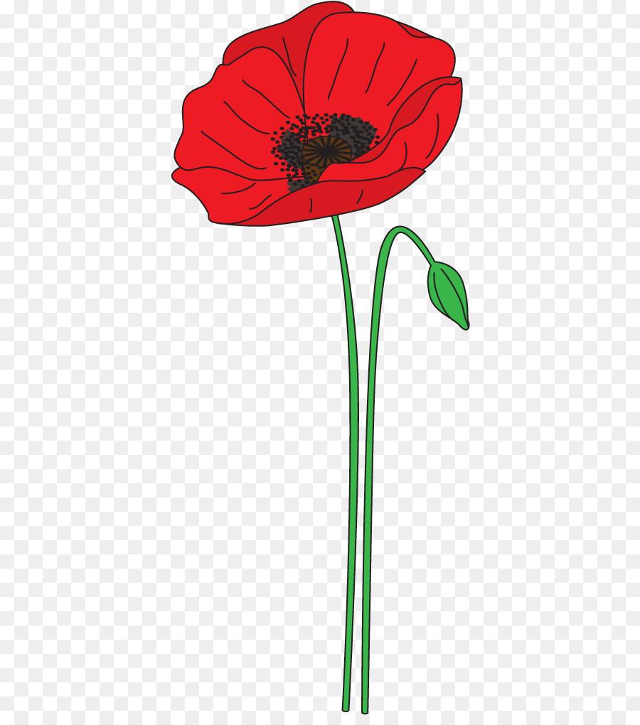Anzac Day Flower.