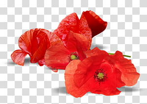 Anzac Day Poppy transparent background PNG cliparts free.