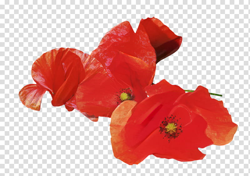 Memorial Day Poppy Flower, Anzac Day, Armistice Day.