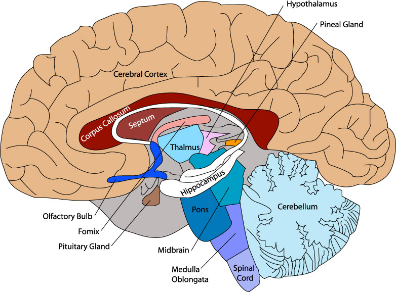 Unit 3 All About the Brain.