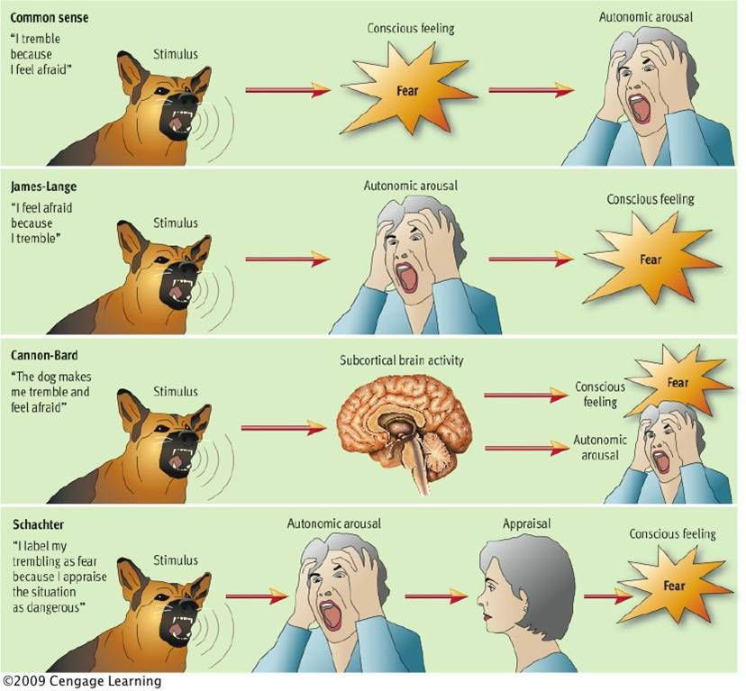 theories of emotion.
