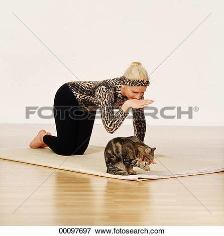 Picture of Juniors, animal, animals, apartment, apartments, cat.
