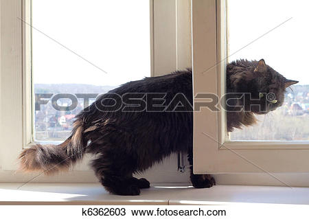 Stock Photo of Out of apartment other world for a cat k6362603.