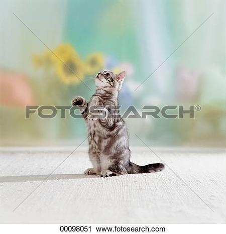 Stock Photography of Juniors, animal, animals, apartment.