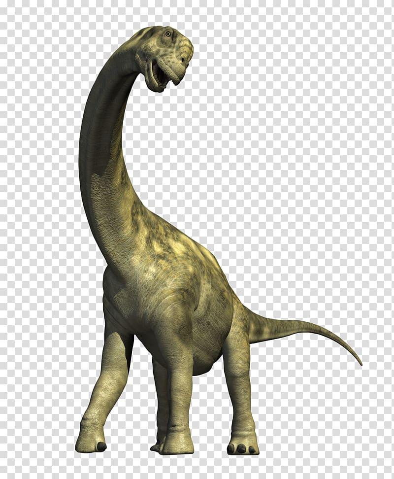 Grey dinosaur, Camarasaurus Apatosaurus Diplodocus Dinosaur.