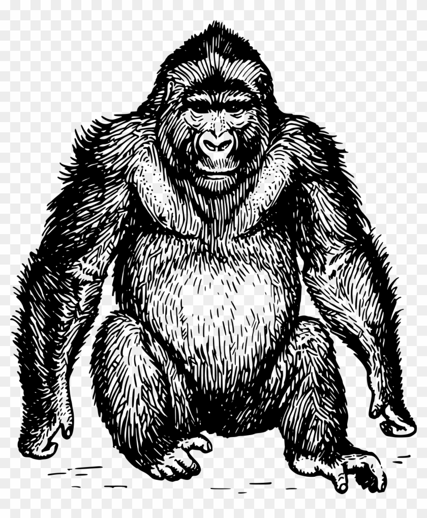 Clip Art Free Ape Clipart Gorilla Head.