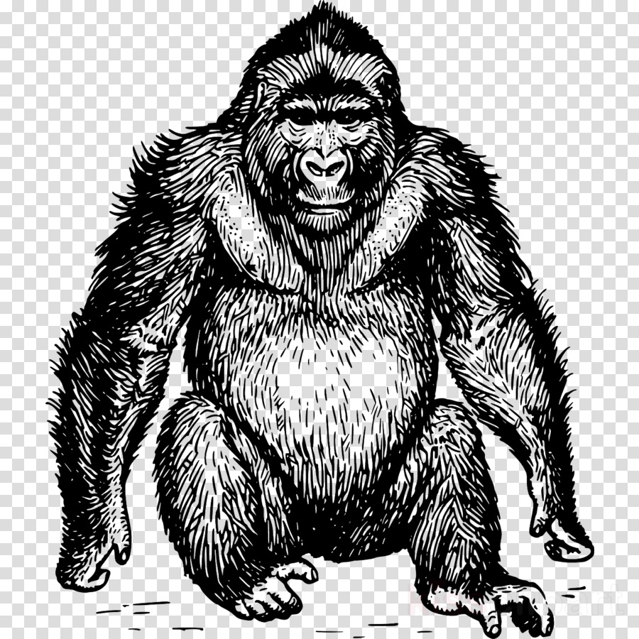 Gorilla Cartoon clipart.