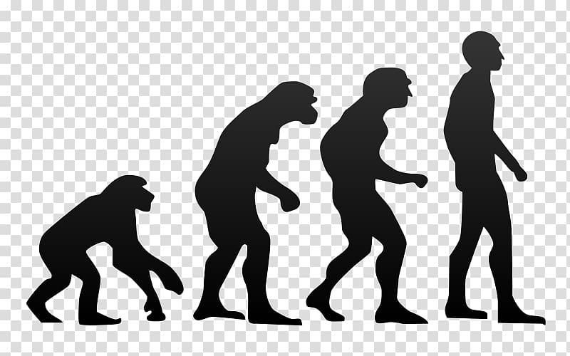 Chimpanzee Ape Human evolution Homo sapiens, evolution.