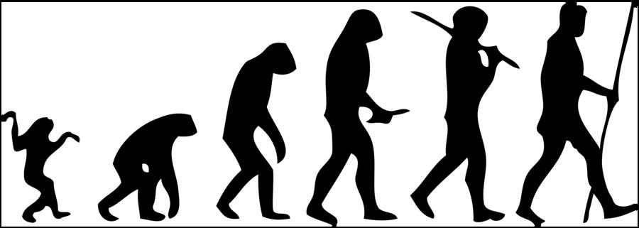human evolution png clipart Human evolution Ape Primate.