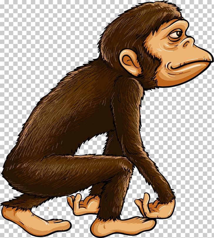 Chimpanzee Ape Primate Monkey, evolution PNG clipart.