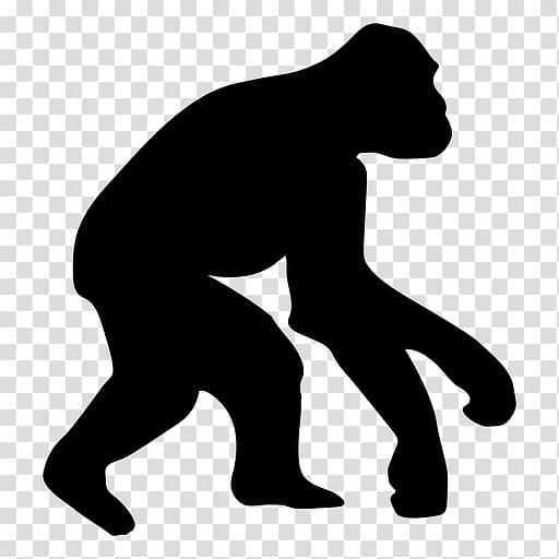 Ape Homo sapiens Human evolution Chimpanzee, gorilla.
