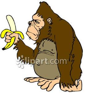 Ape Holding a Peeled Banana.