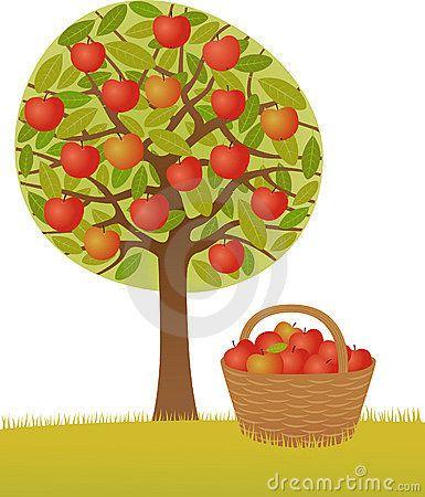Apfelbaum Stock.