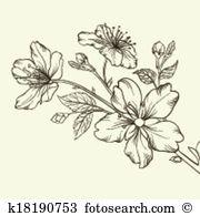 Apfelblüte Clip Art EPS Bilder. 1.111 apfelblüte Clip Art Vektor.