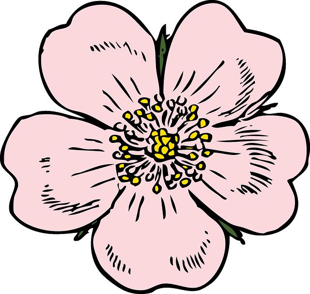 Kostenlose Vektorgrafik: Apfelblüte, Blume, Rose, Pflanze.