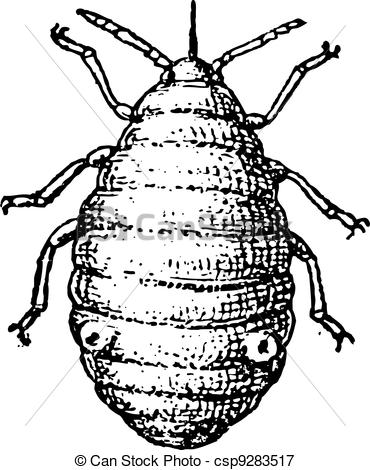 Aphid Illustrations and Stock Art. 140 Aphid illustration and.