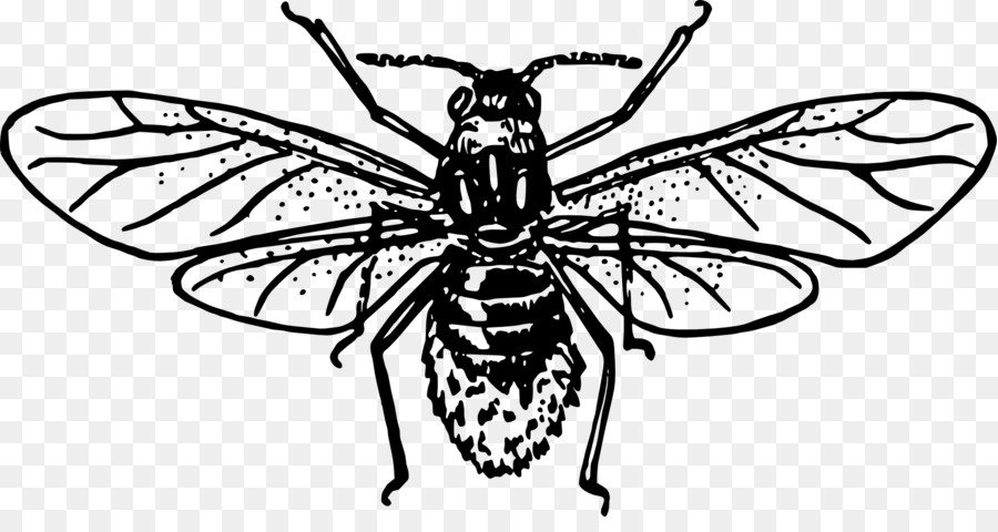 Aphid Insect Clip art.