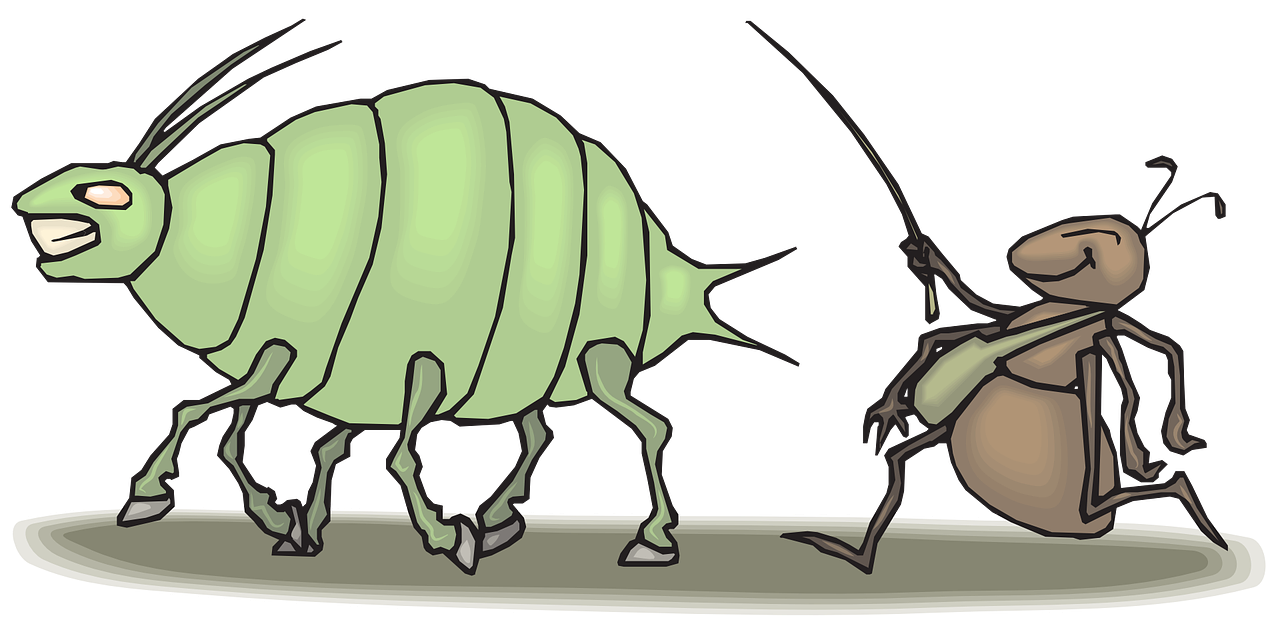 Ant Walking Insects Aphid PNG.