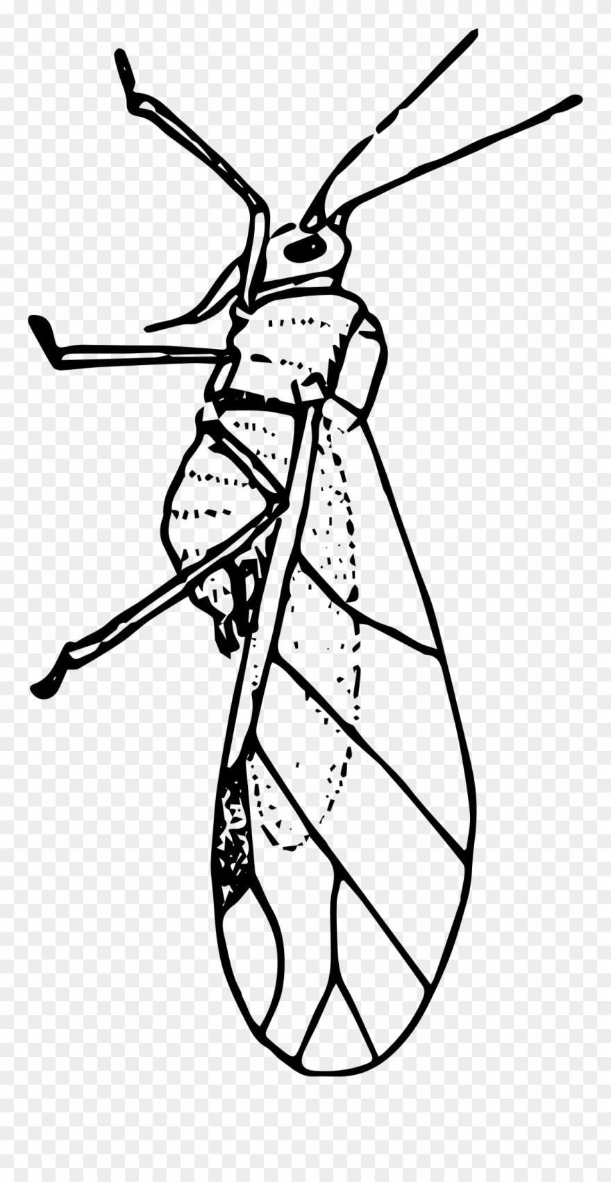 Bug Clipart Aphid.
