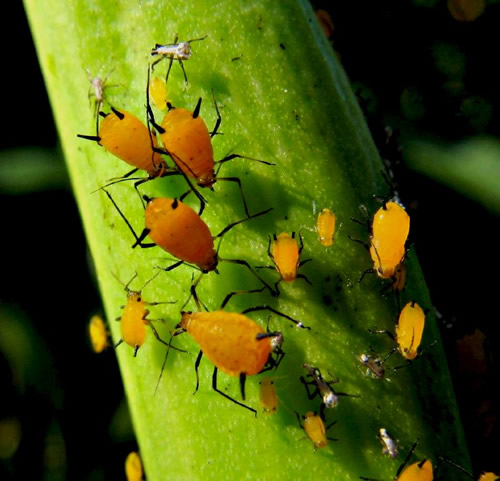 Have You Wondered: What Do Ladybugs Eat?.