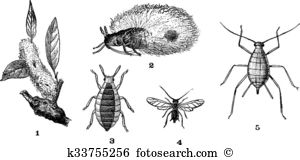 Aphids Clipart Vector Graphics. 90 aphids EPS clip art vector and.