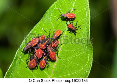 Stock Photos of Aphids on a Leaf.