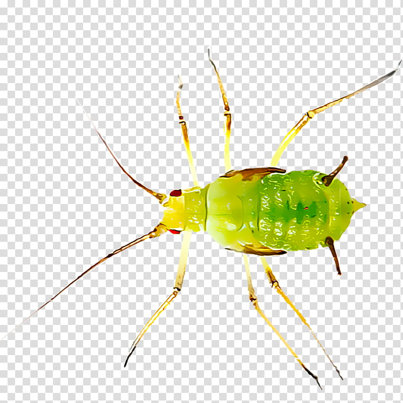Aphids transparent background PNG cliparts free download.