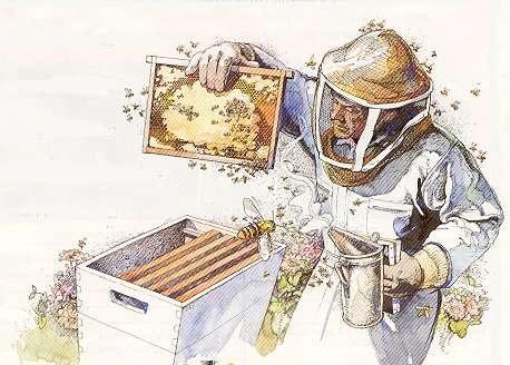 Beekeeping Clipart.