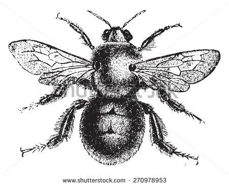 Apidae Stock Photos, Royalty.