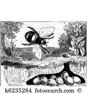 Apinae Clipart Illustrations. 2 apinae clip art vector EPS.