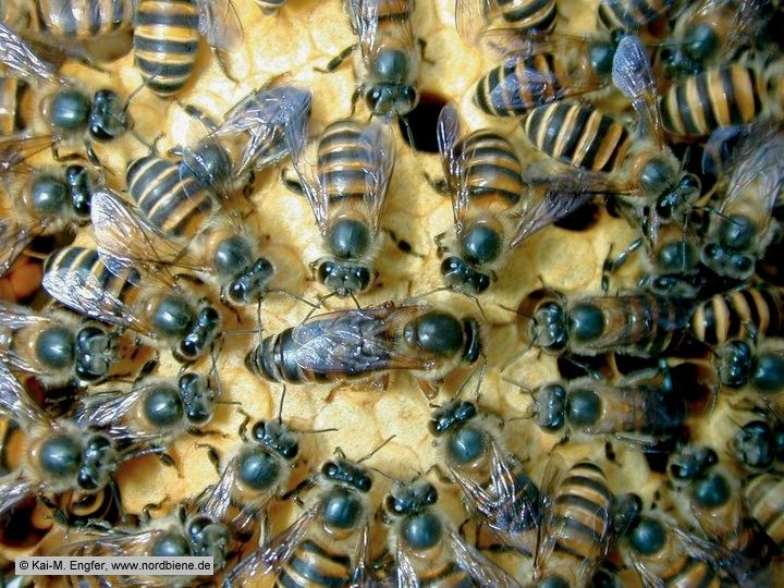 1000+ images about Honey bees on Pinterest.