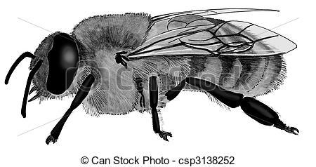 Clip Art of Honey Bee.